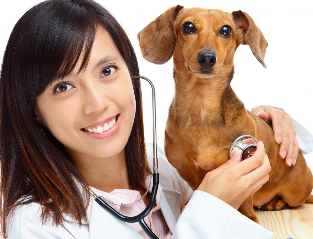 What Does a Veterinary Pharmacist Do?